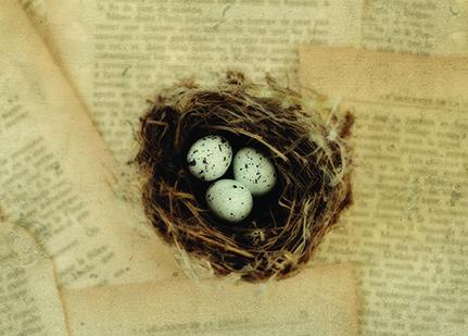 Birds Nest.jpg web