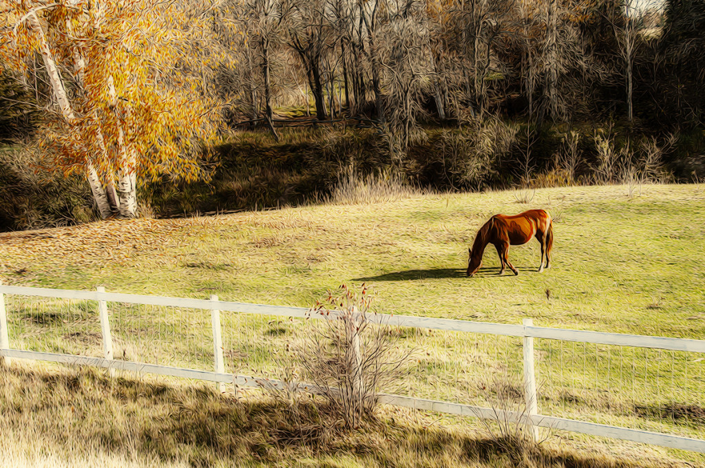 Horse in Field 2 painted 2.jpg copy.jpg web