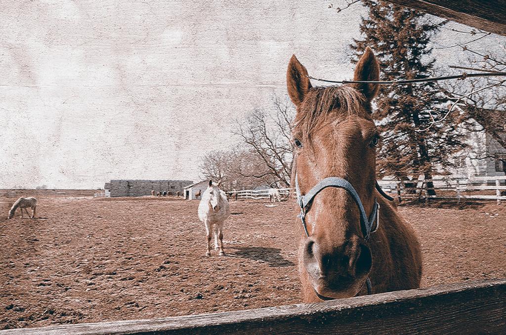 Horses By Fence 1.jpg hdr.jpg3jpg.jpg craquelure.jpg 3.jpg web