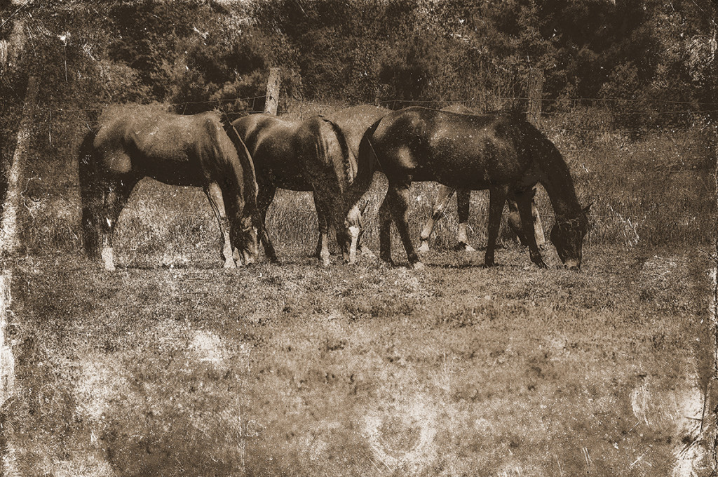 Horses Field 11 sepia copy.jpg web