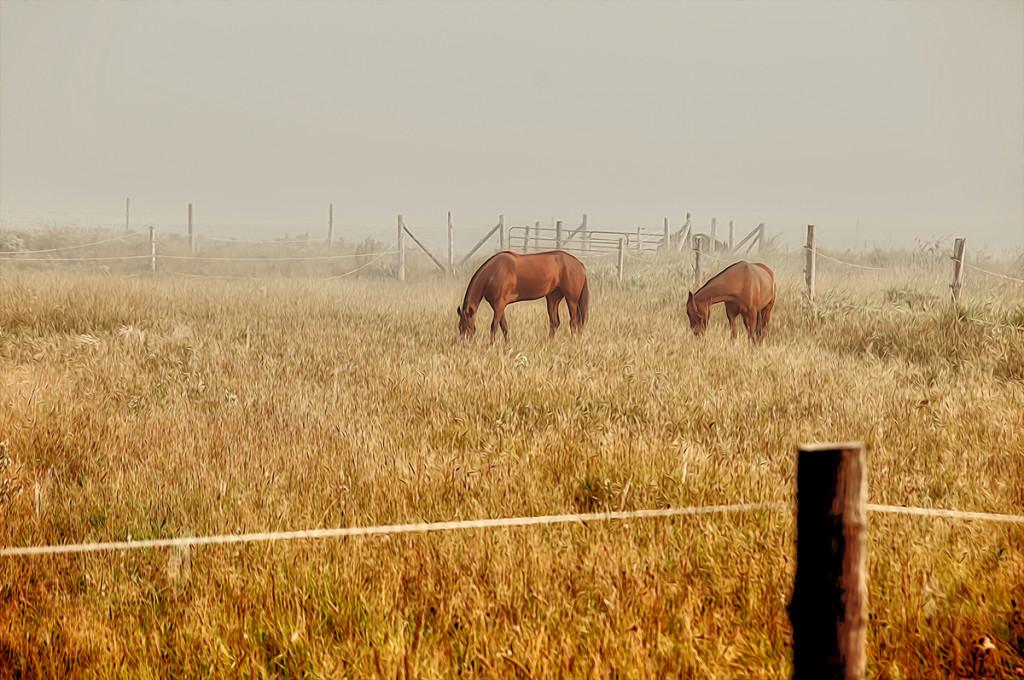 Horses Foggy Day.jpg Painted 5.jpg bxw.jpg 2.jpg hdr.jpg web